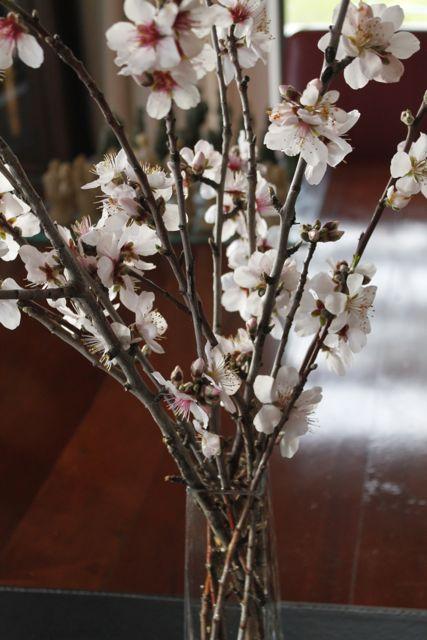 almond-blossom-blog